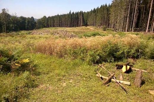 Wildkamperen Ardennen